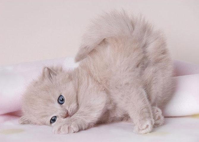 soft-kittens_.jpg